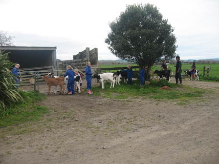 Calf Club Kids 2011